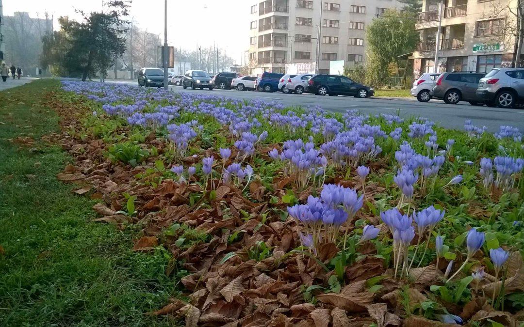 Květiny v ulicích i v Třebíči?